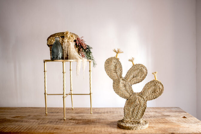 Cactus chumbera
